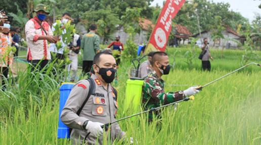 Antisipasi Hama, TNI, Polri dan Forkopimda Bantu Semprot Lahan Pertanian